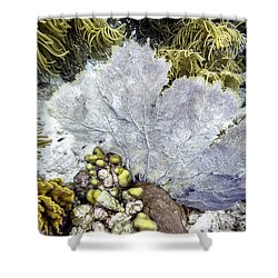 Sea Fan Coral Shower Curtain