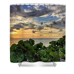 Sea Grape Sunrise Shower Curtain