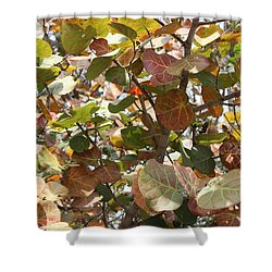 Sea Grapes On Sanibel Shower Curtain by Carol Groenen