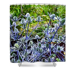 Sea Holly Blooming Shower Curtain by Tanya Searcy