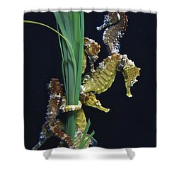 Shower Curtain featuring the photograph Sea Horse by Joan Reese