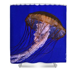 Shower Curtain featuring the photograph Sea Jelly by Jeanette French