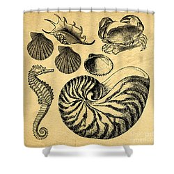 Shower Curtain featuring the drawing Sea Life Vintage Illustrations by Edward Fielding