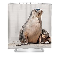 Sea Lion 1 Shower Curtain by Werner Padarin