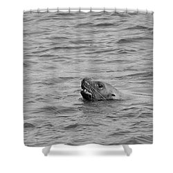 Sea Lion In The Wild Shower Curtain