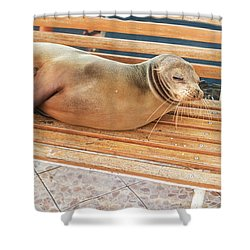 Sea Lion On A Bench, Galapagos Islands Shower Curtain