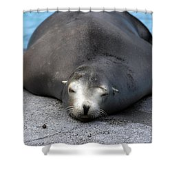 Sea Lion Snooze Shower Curtain