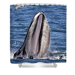 Sea Lions Are Friends, Not Food Shower Curtain