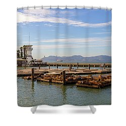 Sea Lions At Pier 39 In San Francisco Shower Curtain