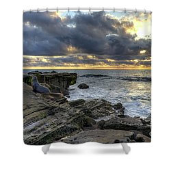 Sea Lions At Sunset Shower Curtain by Eddie Yerkish