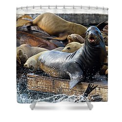 Sea Lions On The Floating Dock In San Francisco Shower Curtain