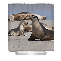 Shower Curtain featuring the photograph Sea Lions by Werner Padarin