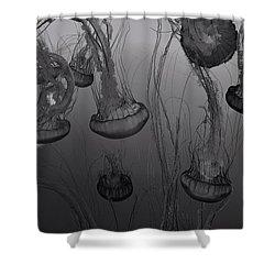 Sea Nettle Jellyfish In Motion Shower Curtain