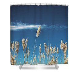 Shower Curtain featuring the photograph Sea Oats On A Blue Day by Colleen Kammerer