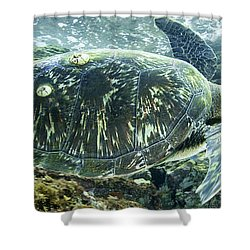 Sea Of Cortez Green Turtle Shower Curtain