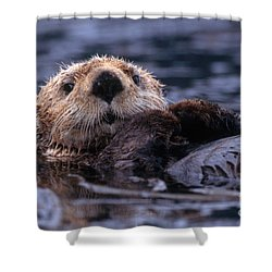 Sea Otter Shower Curtain by Yva Momatiuk and John Eastcott and Photo Researchers