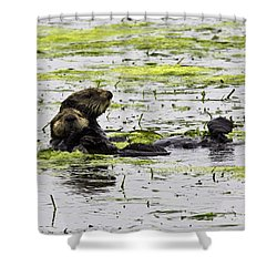 Sea Otters 1 Shower Curtain