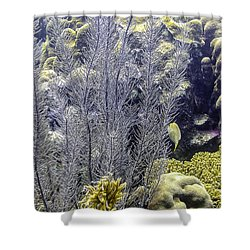 Sea Plumes Coral 2 Shower Curtain