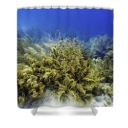 Sea Rod Corals  Shower Curtain