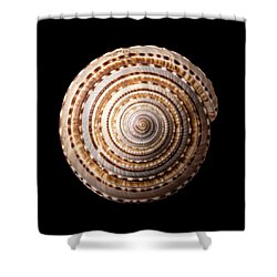 Sea Shell Known As Staircase Or Sundial Shower Curtain by Jim Hughes