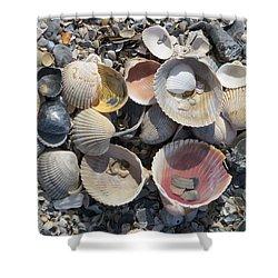 Sea Shell Mozaic Shower Curtain