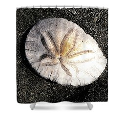 Shower Curtain featuring the photograph Sea Shell by Norman Hall