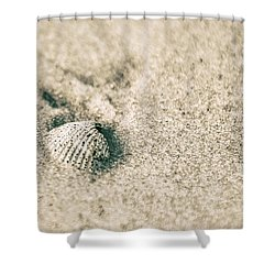 Shower Curtain featuring the photograph Sea Shell On Beach  by John McGraw