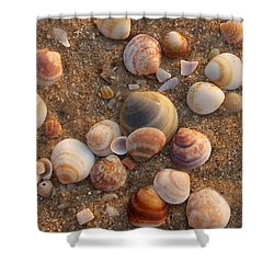 Sea Shells At Sunset Shower Curtain