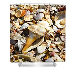 Sea Shells Shower Curtain by David Lee Thompson