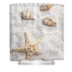 Sea Shells Shower Curtain by Joana Kruse