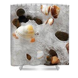 Sea Shells Rocks And Ice Shower Curtain by Matt Suess