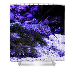 Shower Curtain featuring the photograph Sea Spider by Francesca Mackenney