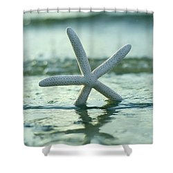 Shower Curtain featuring the photograph Sea Star Vert by Laura Fasulo