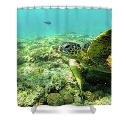 Shower Curtain featuring the photograph Sea Turtle #2 by Anthony Jones