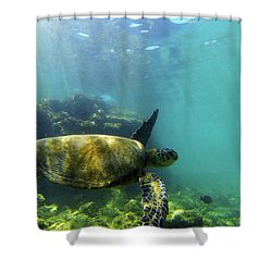Shower Curtain featuring the photograph Sea Turtle #5 by Anthony Jones
