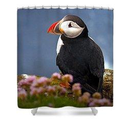 Seabird Atlantic Puffin Shower Curtain