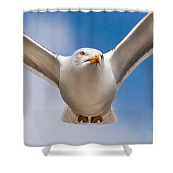 Seabird Closeup Shower Curtain