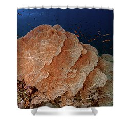 Shower Curtain featuring the photograph Seafans In The Red Sea by Rico Besserdich