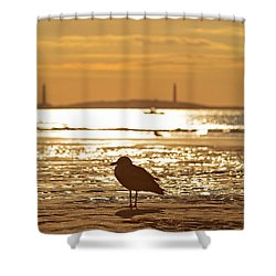 Seagull Admiring Thacher Island Gloucester Ma Good Harbor Beach Shower Curtain