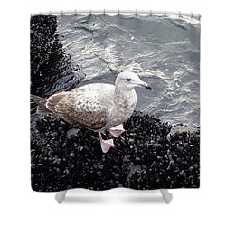 Seagull And Mussels Shower Curtain