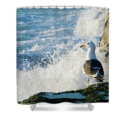 Seagull And The Sea Shower Curtain