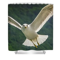 Seagull At The Fjord Shower Curtain