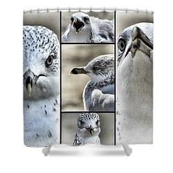 Seagull Collage Shower Curtain by Aurelio Zucco