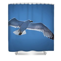 Shower Curtain featuring the photograph Seagull by Davor Zerjav