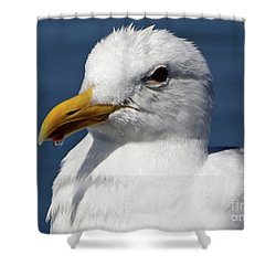 Seagull Drip  Shower Curtain
