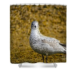 Shower Curtain featuring the photograph Seagull Family by Melissa Messick