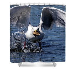 Seagull Flight Shower Curtain