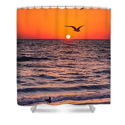 Seagull Hat-trick Shower Curtain