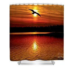 Seagull Homeward Bound Shower Curtain by Carol F Austin