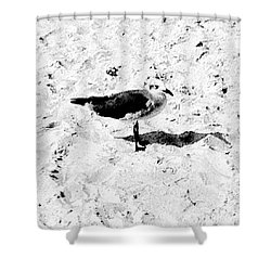 Seagull I Shower Curtain